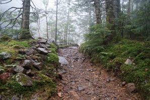 霧雨の登山道