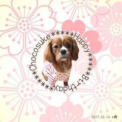 桜のましかくカード ちょこ助 mini