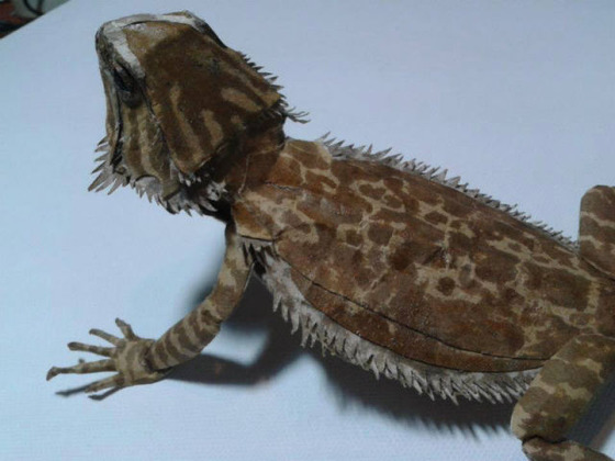 lifelike_bearded_dragon_made_out_of_cardboard_640_23