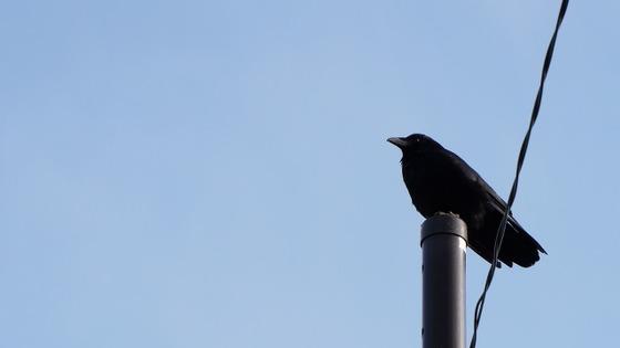 crow1b-rv-640x360