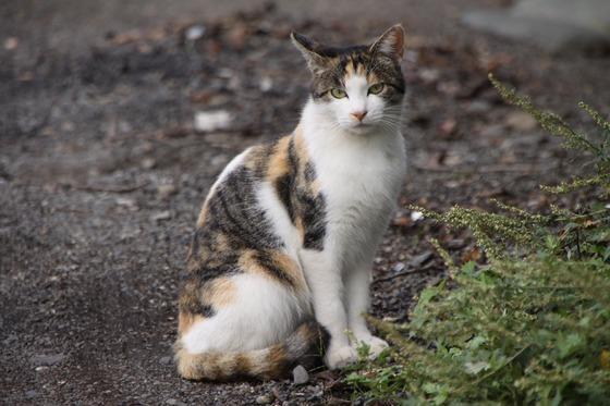 野良猫(相模川沿い)