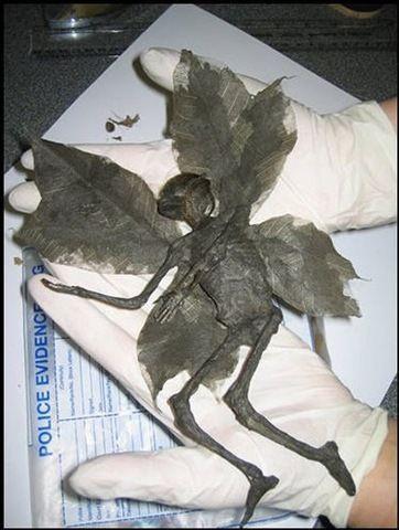 【画像】ファンタジーとされていた妖精、本場イギリスで発見される
