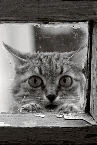 cat_behind_the_window