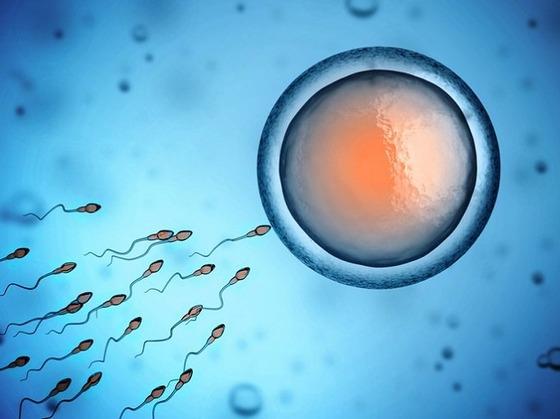 【朗報】肩に塗るだけで精子が死滅する「塗るコンドーム」を米政府機関か発明