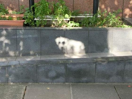 【画像】Twitter民「『白い犬がいる』と思ったら、木漏れ日でした。」