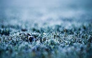 Frost_Wallpaper_1_by_pavel89l