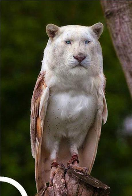 hybrid-animals18