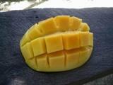 マンゴー横