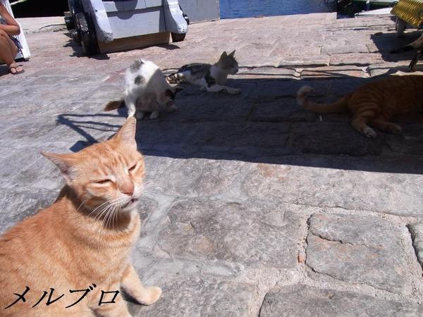 イドラ島の猫