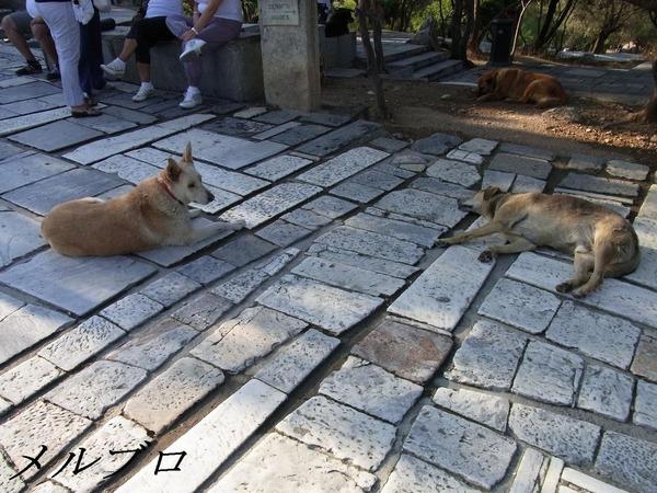 アクロポリス入り口の犬