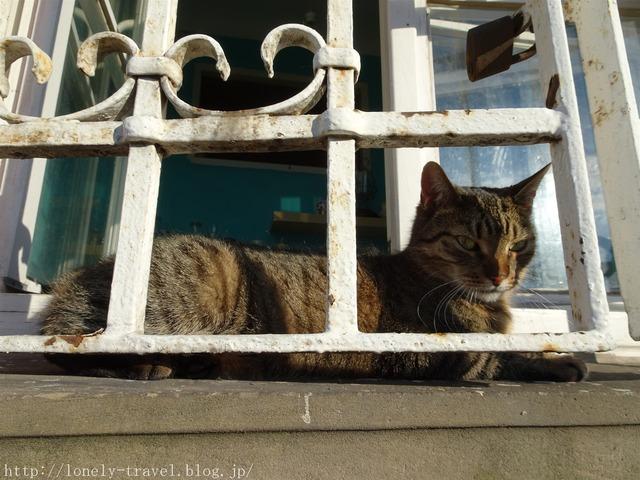 ワルシャワの猫