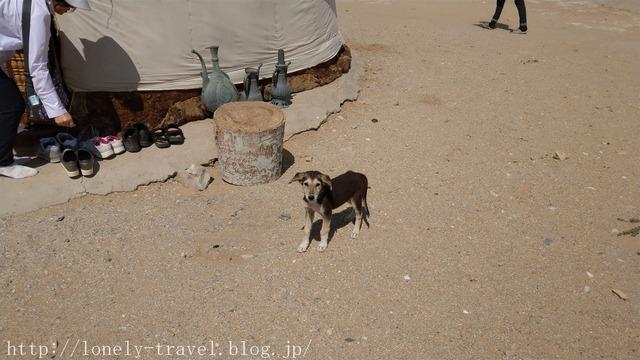 ウズベキスタンの犬