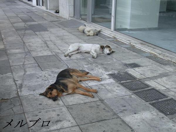アテネの犬