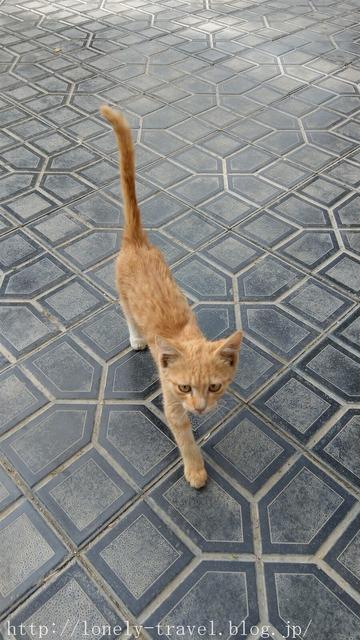 ウズベキスタンの猫