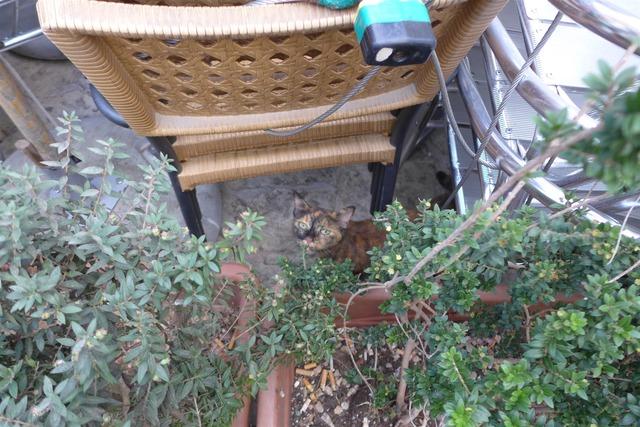 iマルタ猫 Malta cats