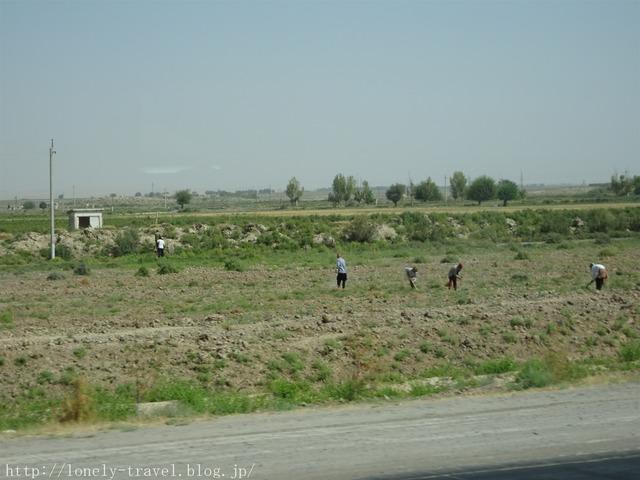 ウズベキスタンの畑