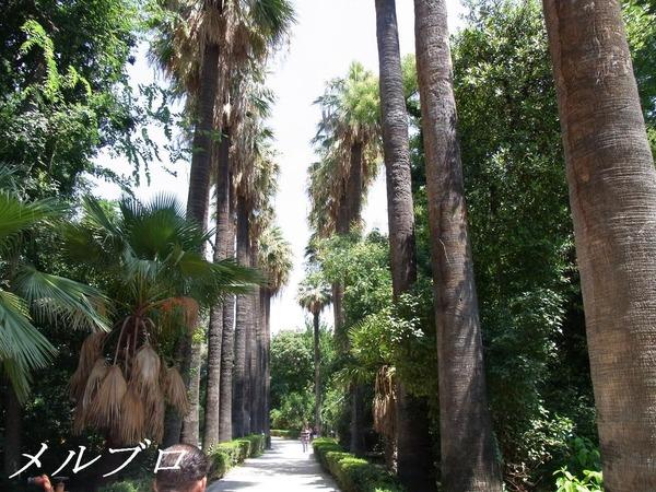 アテネ 国立庭園