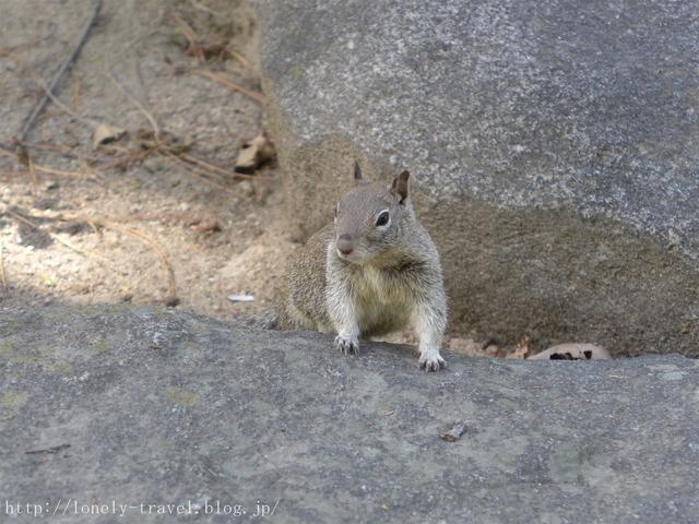 世界遺産ヨセミテ国立公園 Yosemite4