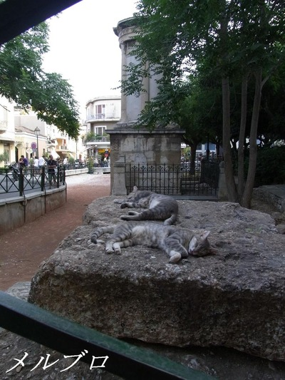 アテネの猫