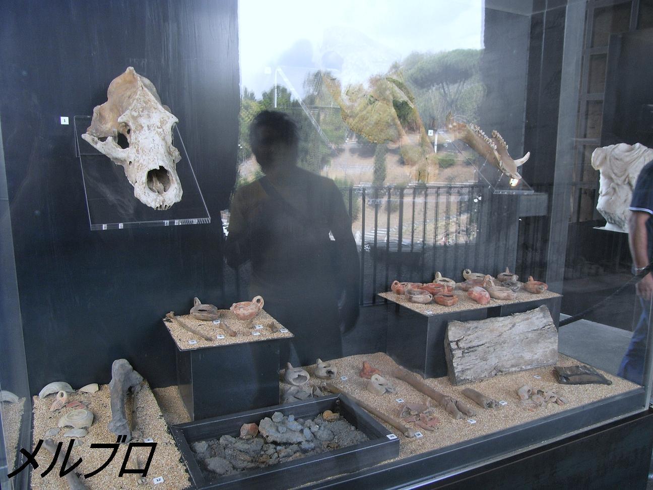 猛獣の化石