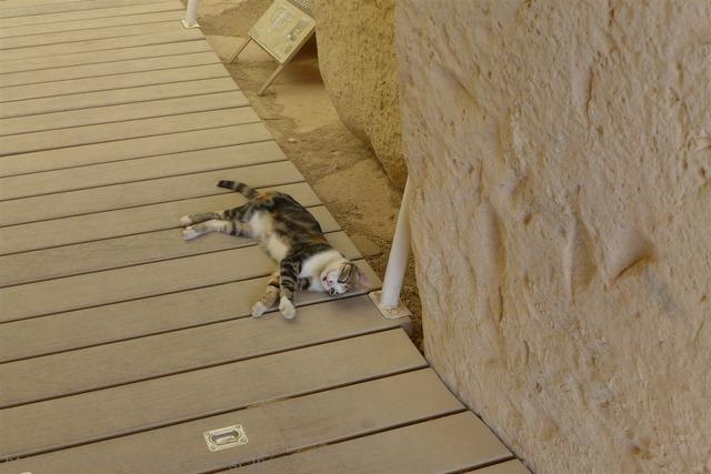 ハジャー・イム神殿 猫 Hagar Qim Temples