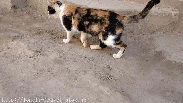 ウズベキスタン ヒヴァ 猫
