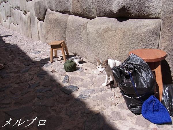 クスコのネコ