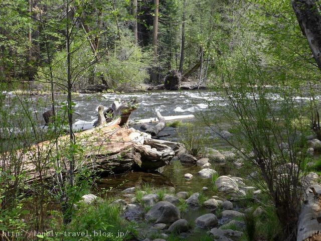 世界遺産ヨセミテ国立公園 Yosemite14