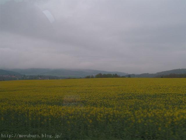 プラハの菜の花畑