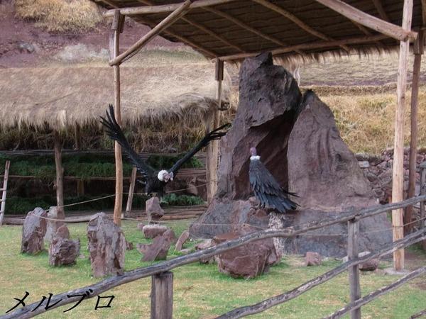 アワナ・カンチャ生活博物館