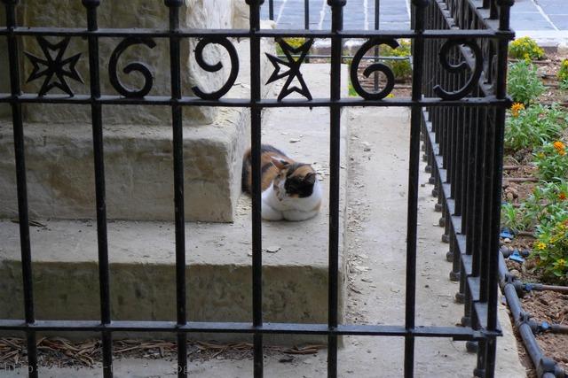 マルタ猫 Malta cats