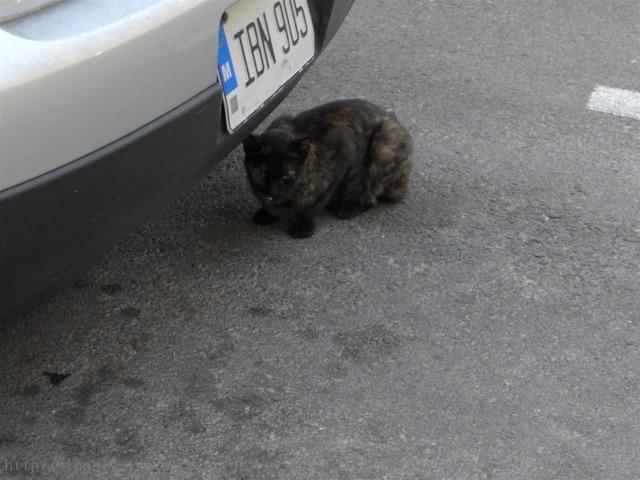 ヴァレッタ猫 Valletta