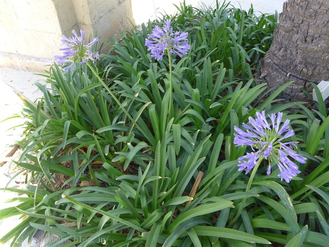アッパー・バラッカ・ガーデン Upper Barrakka Gardens