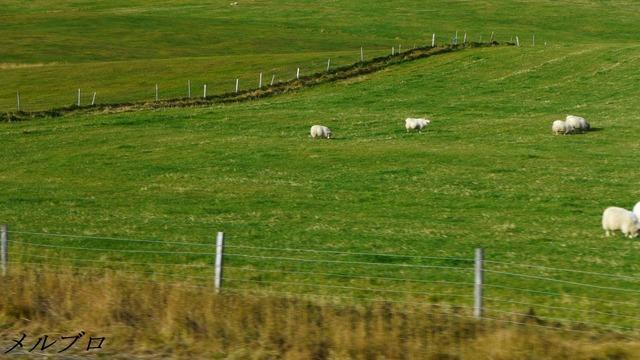 アイスランドの牧場
