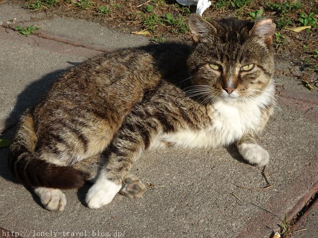 ポーランドの猫