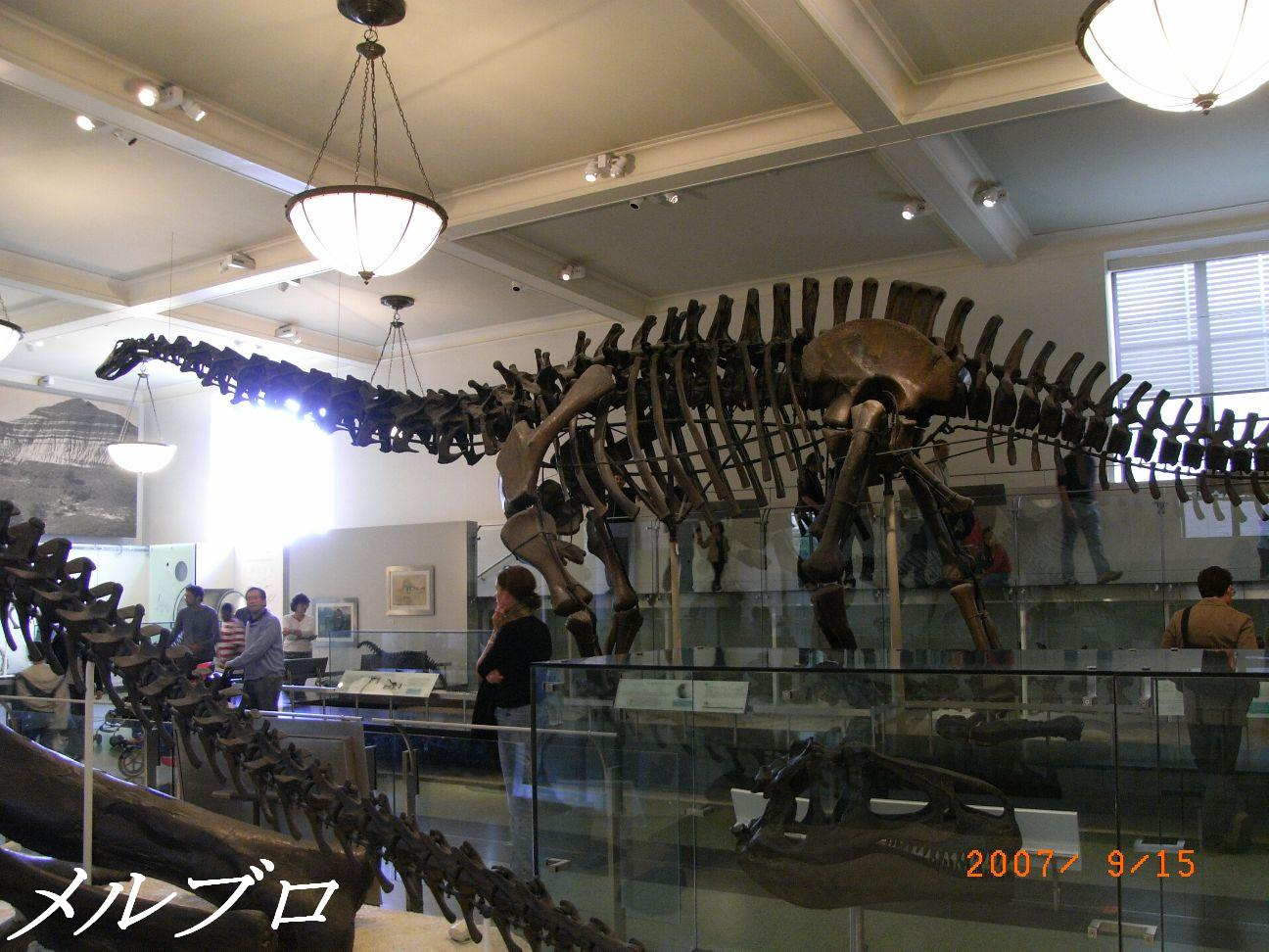 でっかい恐竜