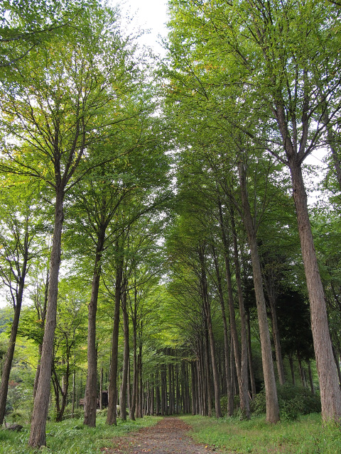 かつら並木