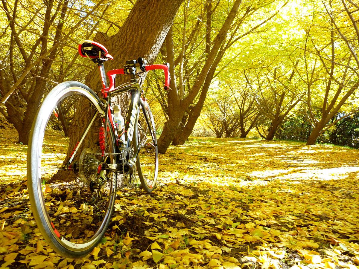 千本銀杏 そして高峠へ バイクを担いでクライミング 風を感じて 自転車とともに