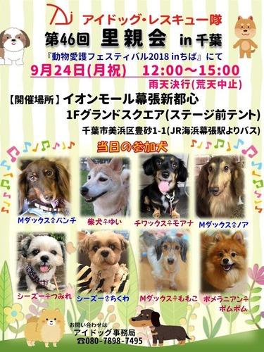 千葉9月参加犬