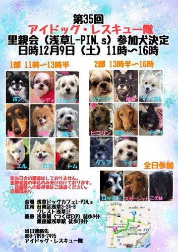 12月里親会参加犬