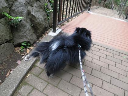 2018(H30)-4-7 朝散歩とその後のマッタリ (4)