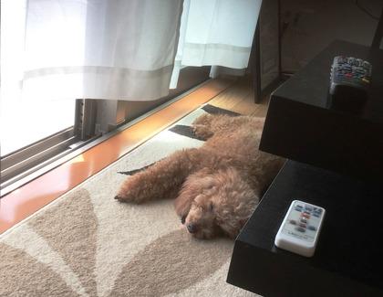 ココの昼寝