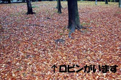 20061129201053.jpg