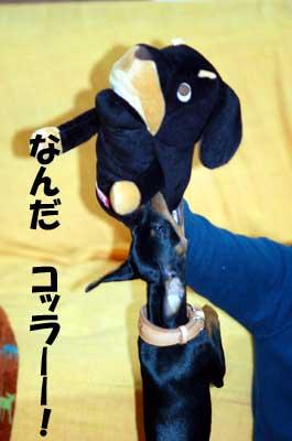 20061129201201.jpg