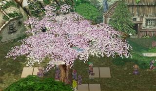 2003年お花見