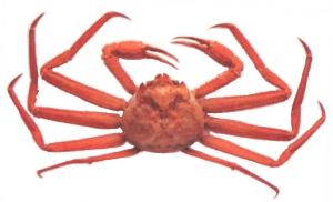 蟹はジャンケン弱い