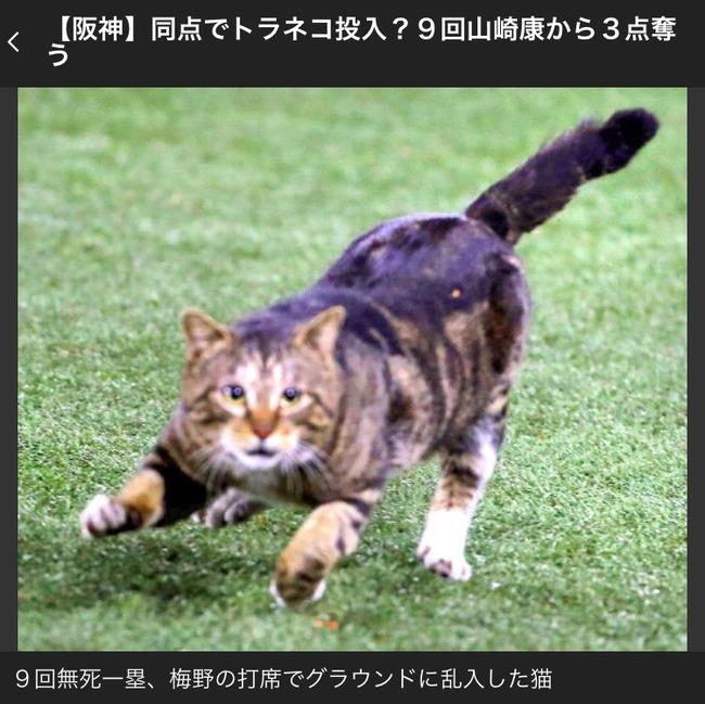 【画像】乱入したネコさんwwww