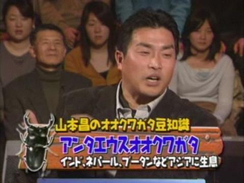 山本昌クワガタ