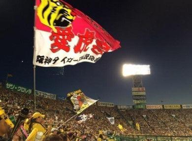 阪神ファン激怒「矢野辞めちまえ!負けすぎや!金本の方がマシや!」