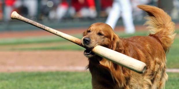 犬 (3)